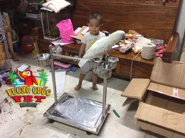 cầu đứng cho vẹt macaw