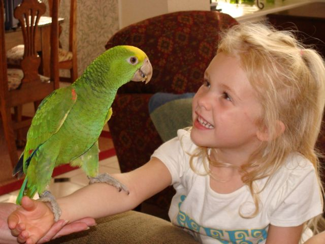 Baby Parrot and Girl