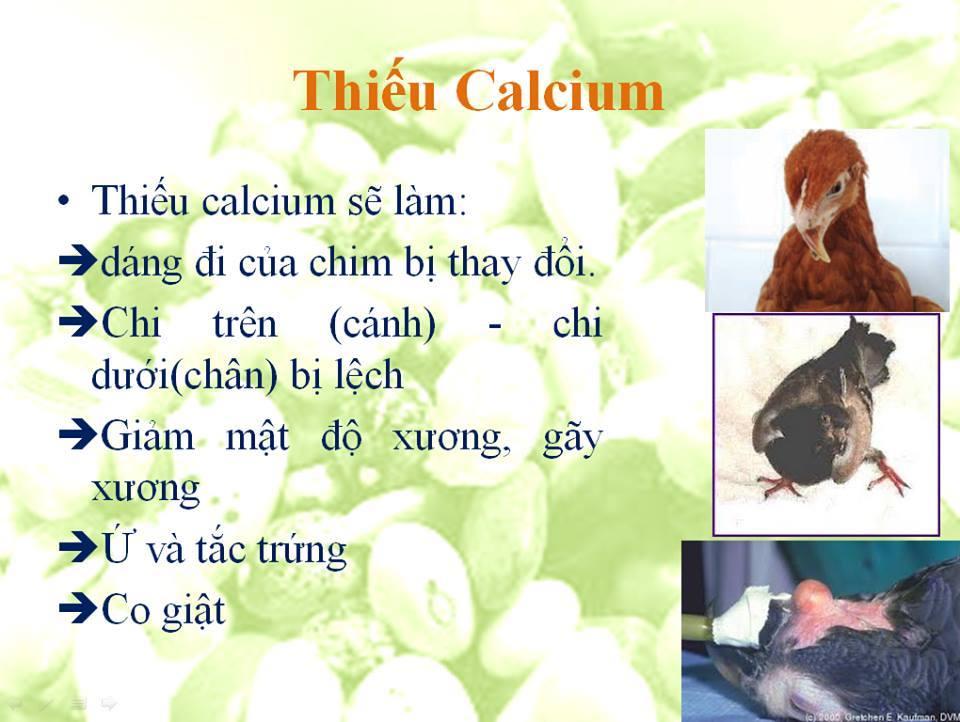 thieu cacilium