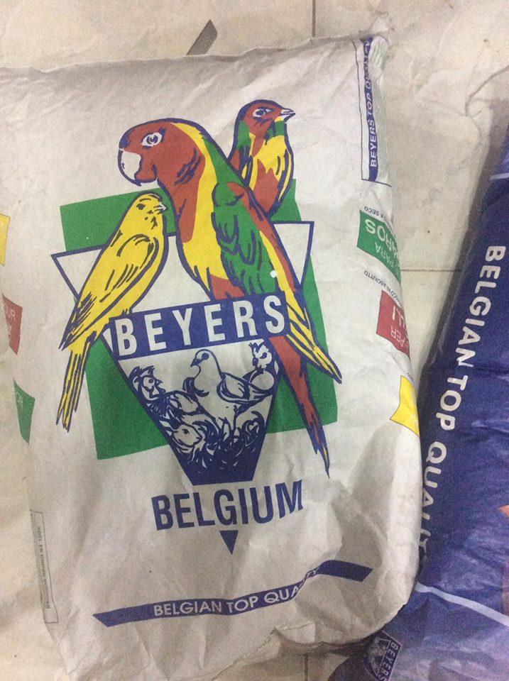 Hướng dương Bỉ Beyers